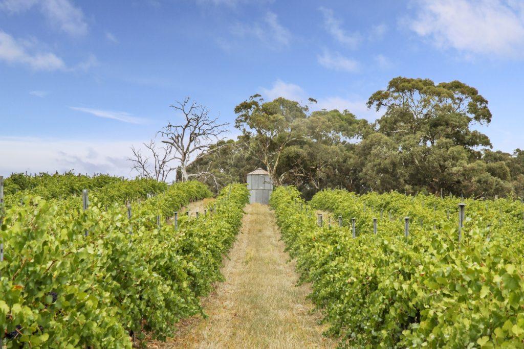 Wine Photographer Adelaide